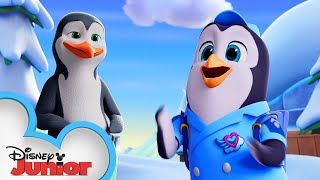 National Penguin Day with Pip! 🐧 | T.O.T.S. | Disney Junior