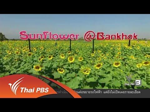 ทุกทิศทั่วไทย : 27 ธ.ค. 59