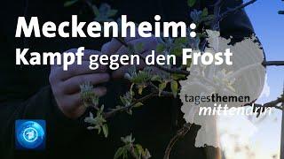 Meckenheim: Kampf gegen den Frost | tagesthemen mittendrin
