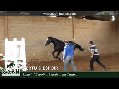 N°62 - Vertu d'Espoir, jument a vendre par Chant d'Espoir videó letöltés
