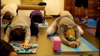 Body Glove Sunrise Yoga at Fit Bar Superfood Cafe