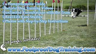 Dog Obedience Classes Knoxville Tn - Improving Dog Behavior