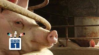 Tết 2020: Thịt lợn khan hàng, sốt giá