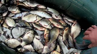 Рыбалка в Сибири на таёжном озере карась щука