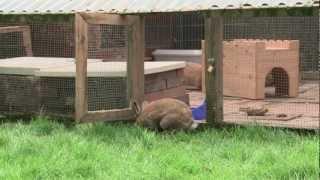 Kaninchen draußen halten