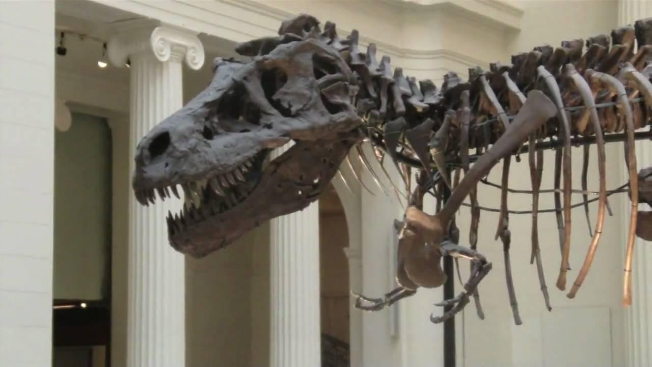 Sue el tercer tiranosaurio rex m s grande del mundo en el for El mundo del mueble sillones