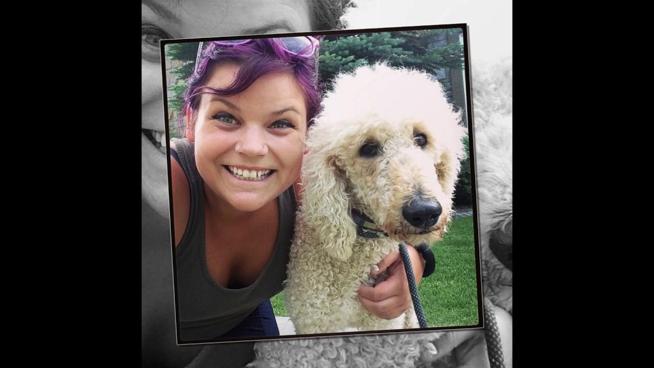 AARCS' SPCA Seizure Dogs - July 2017 - YouTube