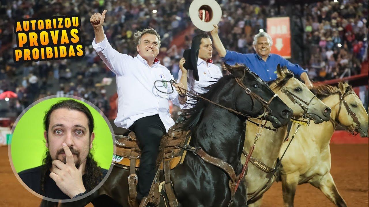 Com decreto, Bolsonaro piora vida dos animais em rodeios