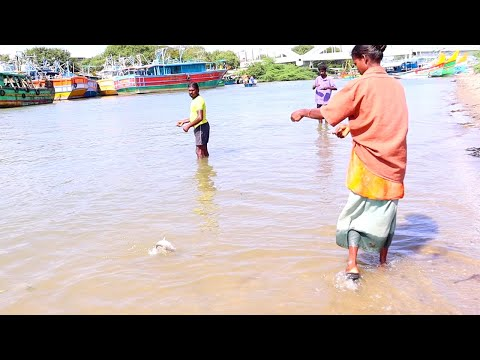 Women Catch A Lot Of Catfish In Saltwater River