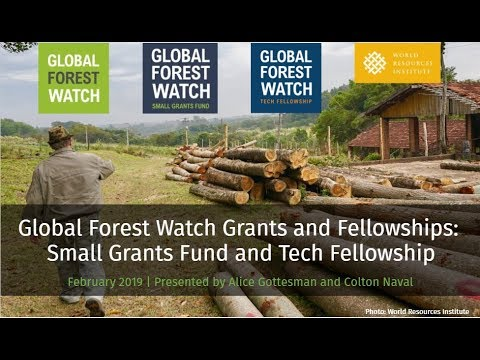 Opens feb 1 2021 12:00 am (est) deadline mar 7 2021 11:59 pm (est) $10,000.00 to $40,000.00 description. Global Forest Watch Youtube