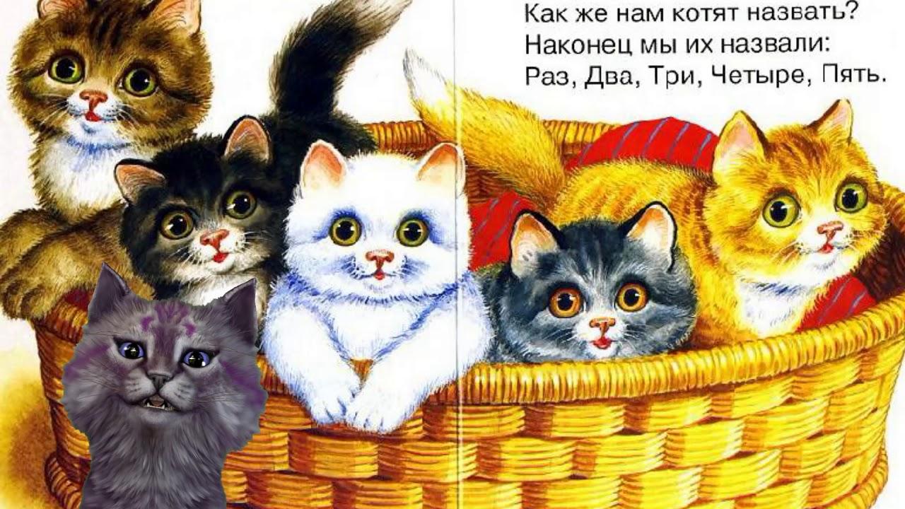 картинки пять котят и одна кошка существует любовь