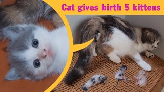 Cat giving birth to 5 super adorable kittens