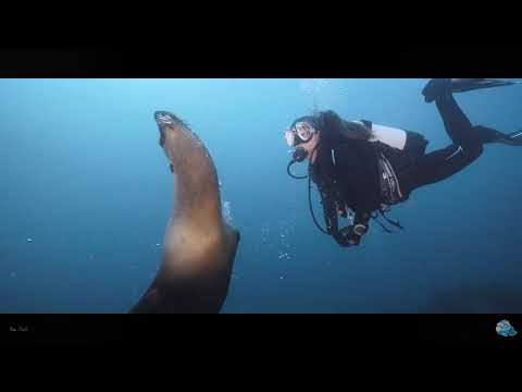Scuba Diving Course With Seal Dive