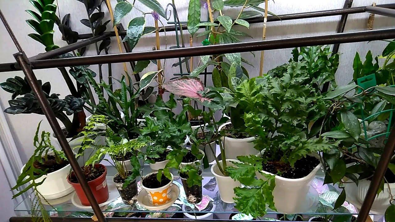 Мои комнатные растения  //  Обзор моих цветов
