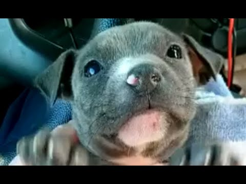 Florida police rescue shivering puppy from under bridge