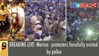 LIVE VISUALS: Police evicting Pro-Jallikattu Protesters in Marina, Chennai