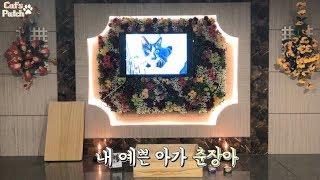 춘장이의 마지막, 내 고양이의 장례식 (춘장이, 별이되…