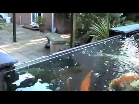 Koi pond 5000 gallons 2m x 1m window by mick gibbs youtube for Koi pond window