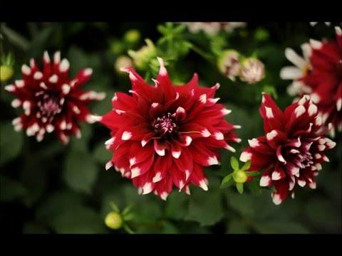 Самые красивые и необычные цветы в мире