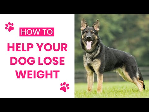 How To Help A Dog Lose Weight - 3 Tips For Helping Overweight Dogs