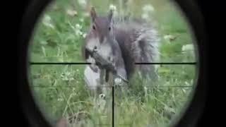 Video Lucu banget!!! Tupai malah menembak anjing download MP3, 3GP, MP4, WEBM, AVI, FLV Juli 2018