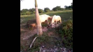 Ngựa...hí.hí