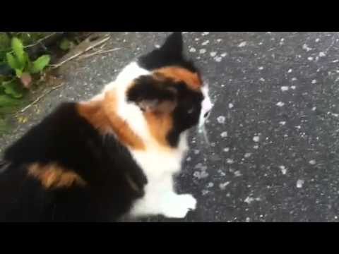 Cat welcomes me home