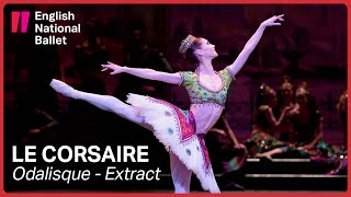 Le Corsaire: Odalisque with Alison McWhinney (extract) | English National Ballet