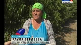 В Астраханской области возрождают Килинчинские сады