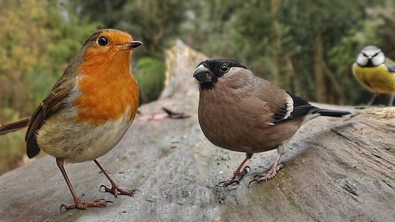 birds flying in slow motion forest birds u0026 bird sounds video for