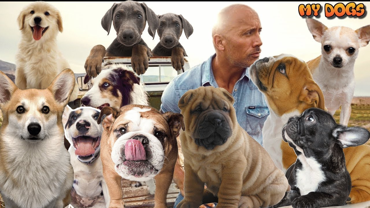 Dwayne The Rock Johnson And His Dogs