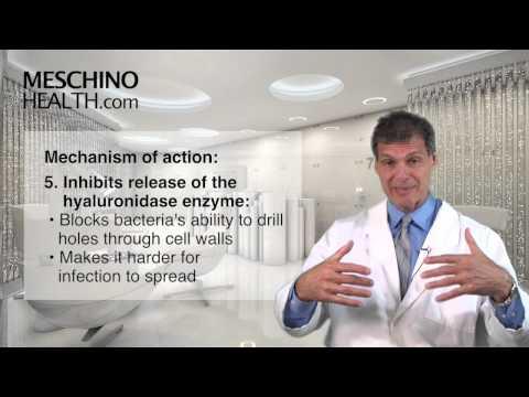 Echinacea: One Of Nature's Immune Modulators