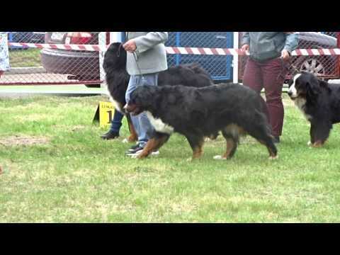 COMPARISON - National Dog Show in Ustka 21.05.2017 puppy class 00105