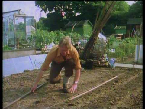 Mr Smith's Vegetable Garden. Part 2