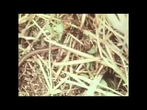pajas masculinas videos xxyyxx en español