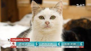 Як коти допомогли жінці пережити рак
