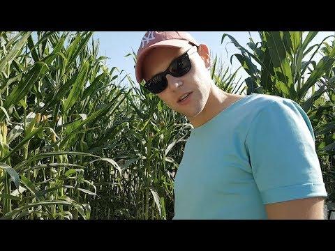 California Corn Cruise | Welcome To My Adventures