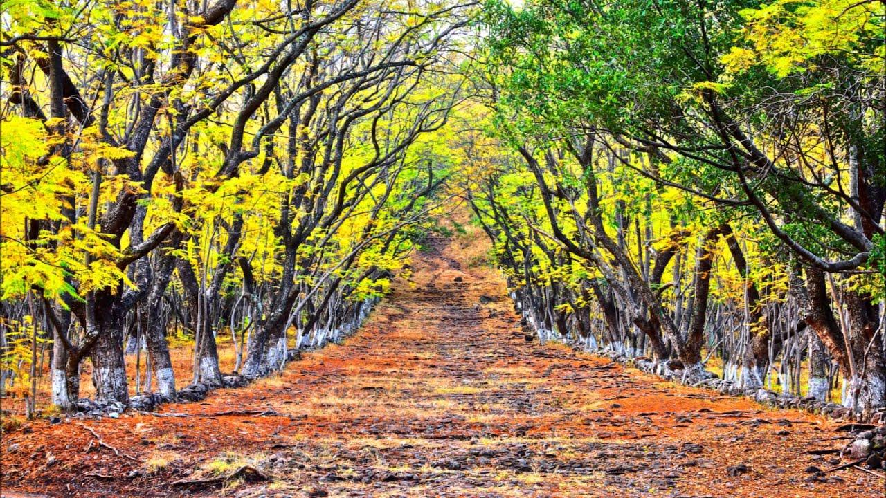 El lugar de los sueños coloridos es el bosque de Cuauhtémoc y Juárez.