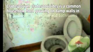 видео Cladosporium herbarum (плесневый гриб, аллерген m2), IgE антитела, кровь, грибок кладоспориум гербарум где встречается
