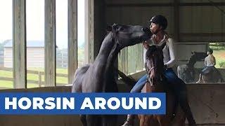 Two Horses and Rider Goof Around