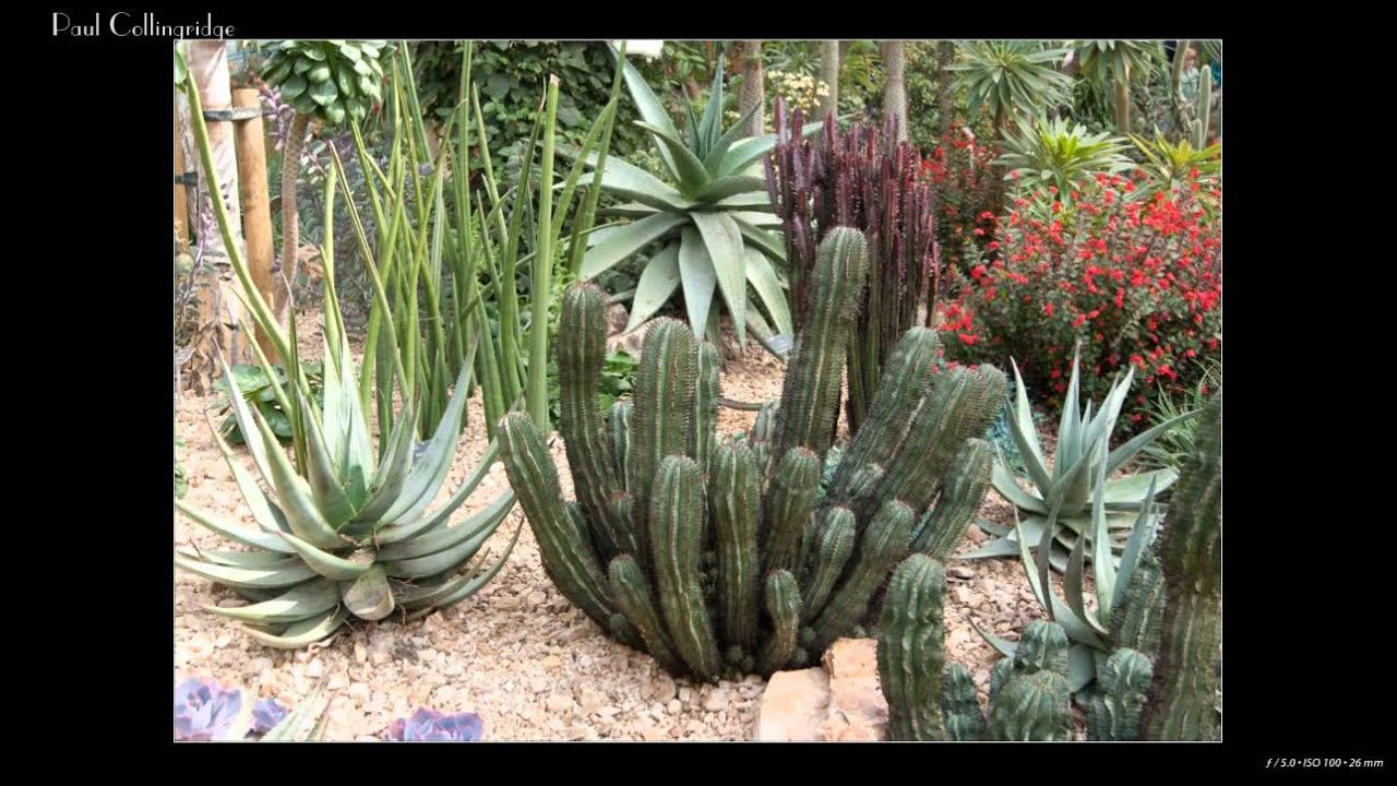 Water Feature Plants