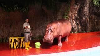 Ancol Gelanggang Samudera - Aneka Satwa - Hippo Show - kuda nil (full show)