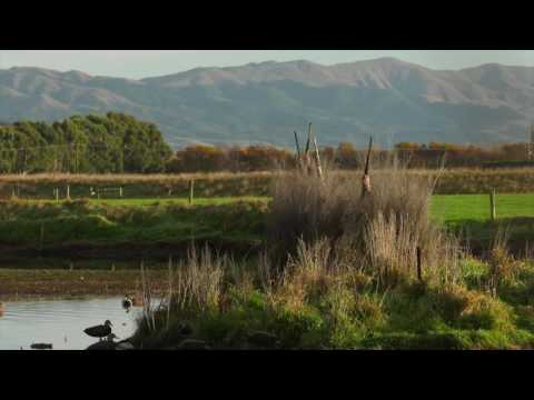 New Zealand Duck hunting  2016