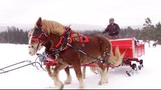 Sleigh - Horse Drawn Sleigh Ride!