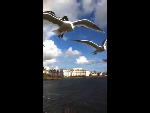 seagulls in the wind
