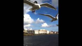 seagulls in the wind