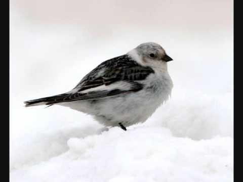 Christmas Classics: The Man And The Birds By Paul Harvey