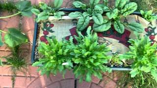 Gambar cover Kate's Garden Patch Grow Box Veggie Garden
