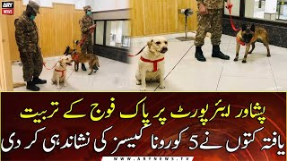 Sniffer Dogs Detect 5 More Covid-infected Passenger At Peshawar Airport