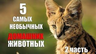 5 САМЫХ необычных домашних животных 2 часть